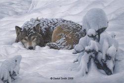 winters-embrace